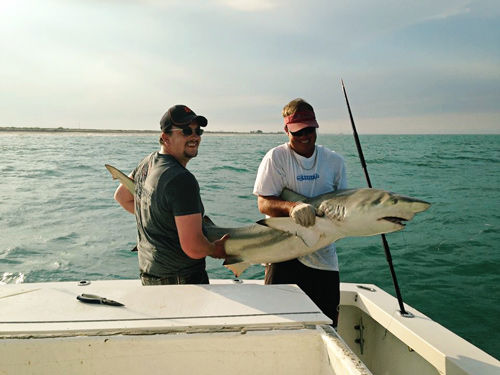 Shark Fishing near Orlando