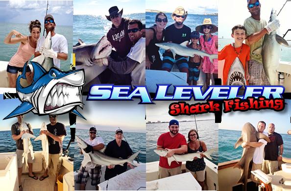 Florida shark fishing for Florida shark fishing charters